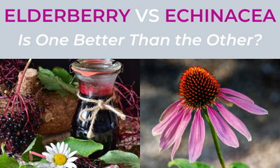 Elderberry Vs Echinacea
