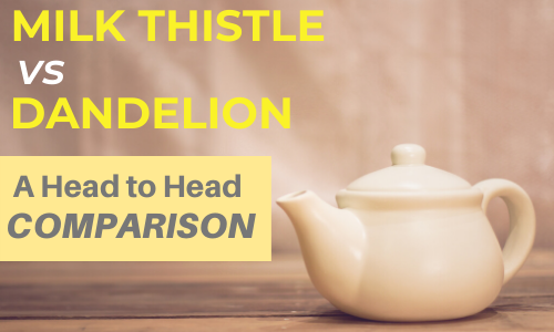 Milk Thistle vs Dandelion: A Modern Comparison