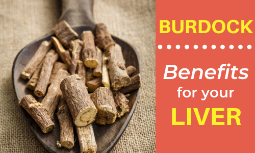 Benefits of Burdock Root for Your Liver