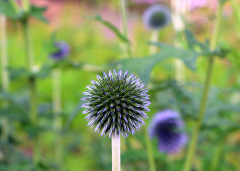 milk thistle is the most popular ingredient in liver support supplements