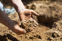 soil rich in trace minerals