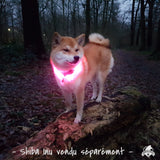 Collier lumineux USB Primitif Addict Shop Shiba Inu