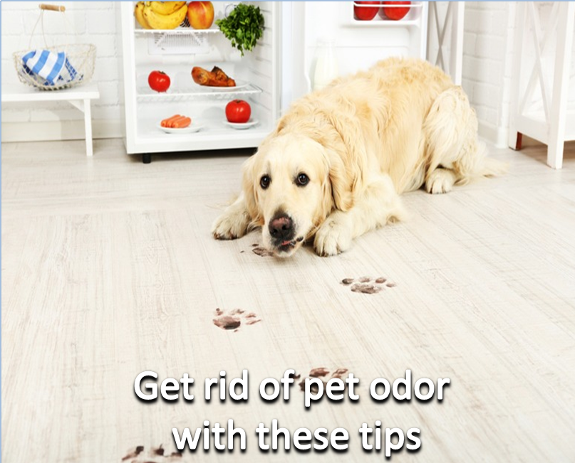 Does Your House Smells Like Dog Heres How To Get Rid Of Pet Odor - How to get rid of pet odor on wood floors