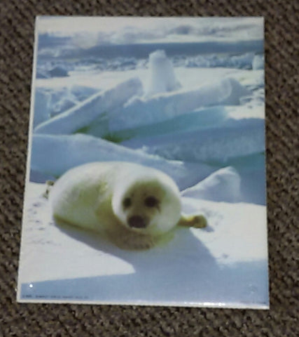 Baby Seal Poster/Wall Hanging