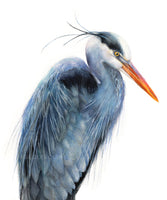 Great Blue Heron Watercolor Archival Print