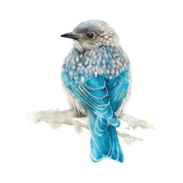 Eastern Bluebird - Art Print of watercolor painting. Juvenile Bluebird