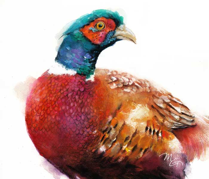 Ring-necked Pheasant Watercolor Archival Print