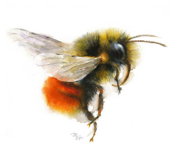 Bumble Bee Watercolor Archival Print