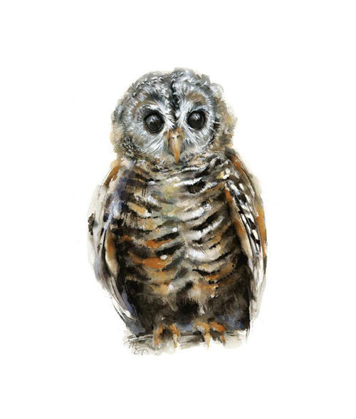 Chaco Owl Watercolor Archival Print