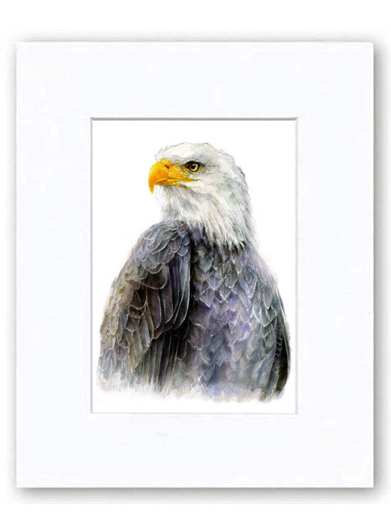 Bald Eagle Watercolor Archival Print
