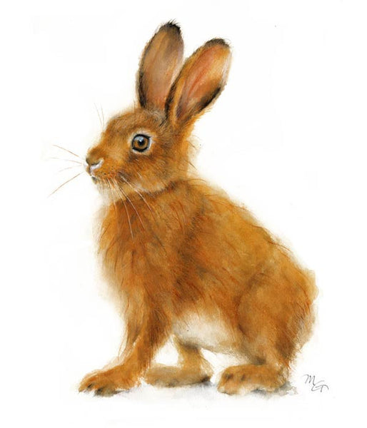 Hare Watercolor Archival Print