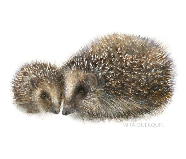 Hedgehog Watercolor - Archival Print
