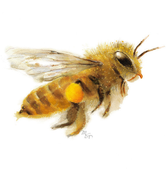 Honey Bee Watercolor Archival Print