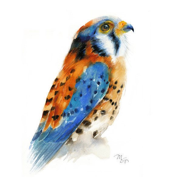 American Kestrel Watercolor Archival Print