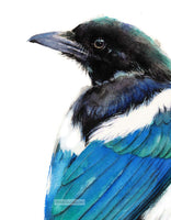 Magpie Watercolor - Art Print