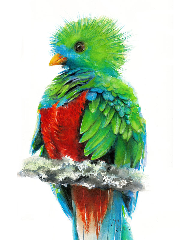 Quetzal Paradise Bird Watercolor Archival Print