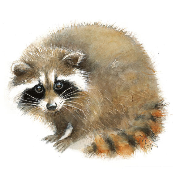 Raccoon Watercolor Archival Print