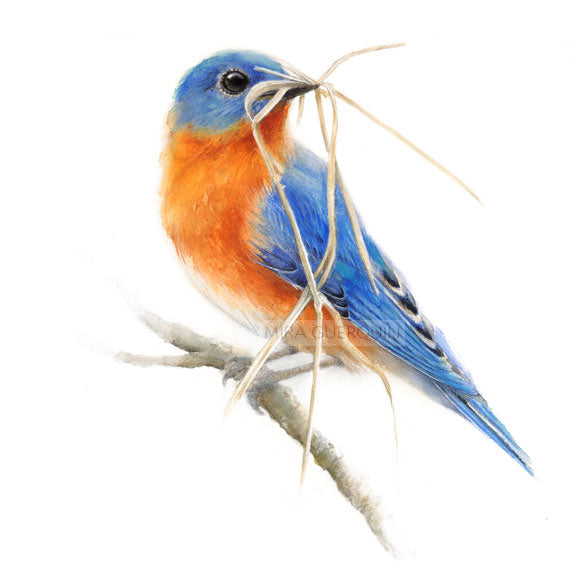 Eastern Bluebird Watercolor - Art Print