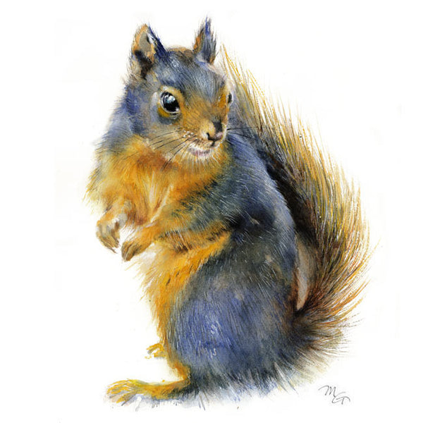 Douglas Squirrel Watercolor Print