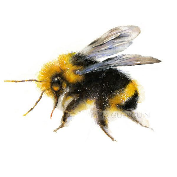Bumble Bee Watercolor Print