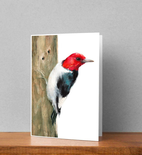 Red-headed Woodpecker Card set - Free Shipping