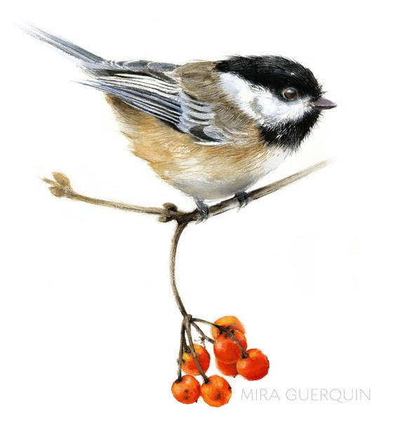 Chickadee Watercolor - Archival Print