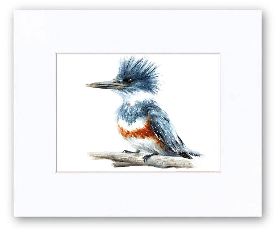 Belted Kingfisher Watercolor Art Print
