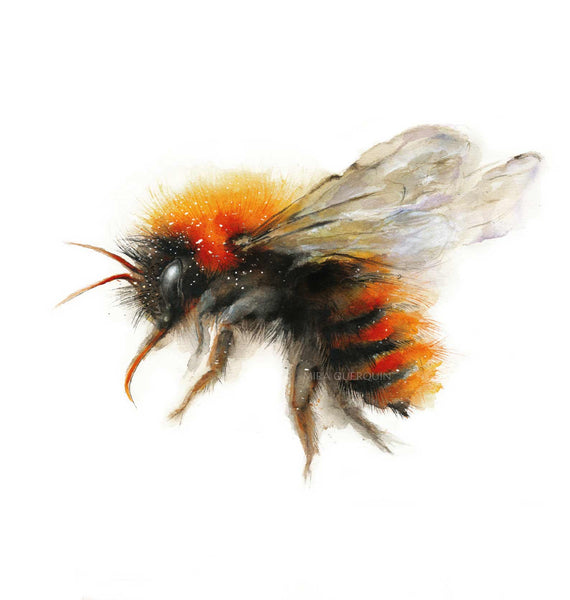 Bumble Bee Watercolor Art Print