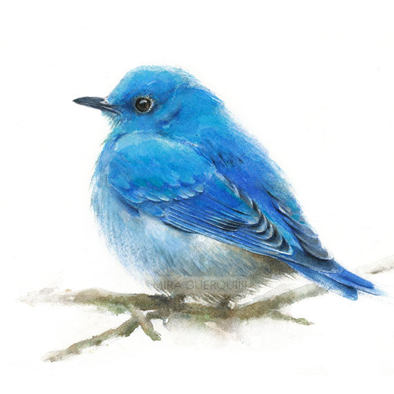 Mountain Bluebird Male - Watercolor Art Print