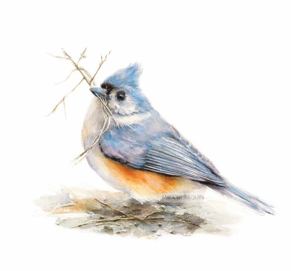 Tufted Titmouse Watercolor - Art Print