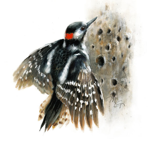Woodpecker in flight Watercolor