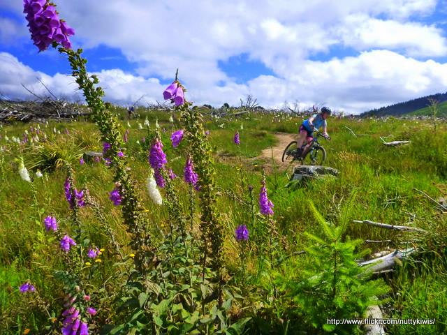 Trail Stories: Arapuke Trails