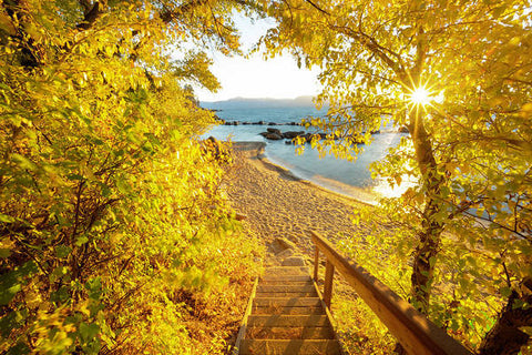 Autumn Steps - Lake Tahoe - Art Print