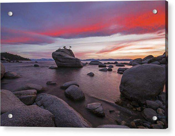 Bonsai Rock On Fire - Acrylic Print