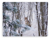 Coyote In The Aspens - Blanket-Lake Tahoe Prints