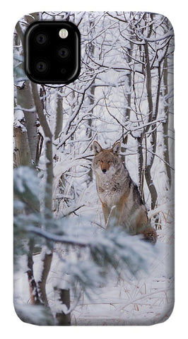 Coyote In The Aspens - Phone Case