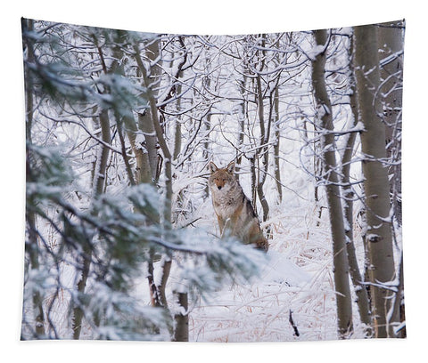 Coyote In The Aspens - Tapestry