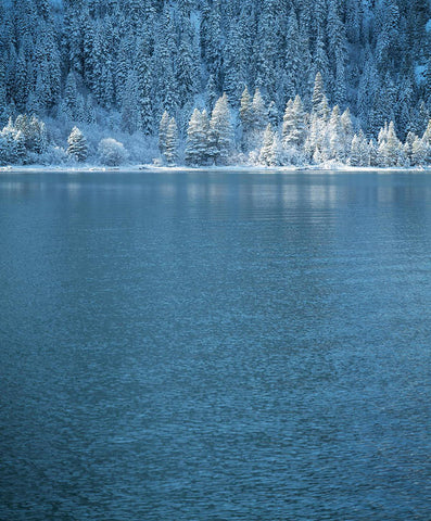 Emerald Bay Frozen Trees by Brad Scott - Art Print