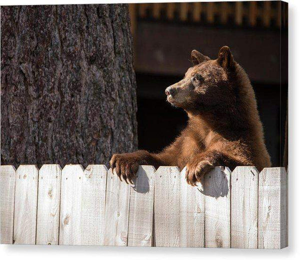 Hey There Neighbor By Brad Scott - Canvas Print-Lake Tahoe Prints