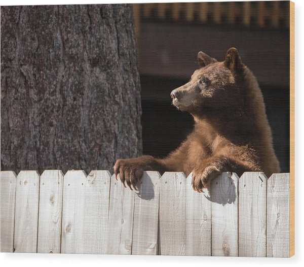 Hey There Neighbor By Brad Scott - Wood Print-Lake Tahoe Prints