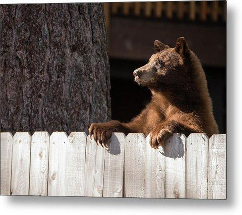 Hey There Neighbor By Brad Scott - Metal Print-Lake Tahoe Prints