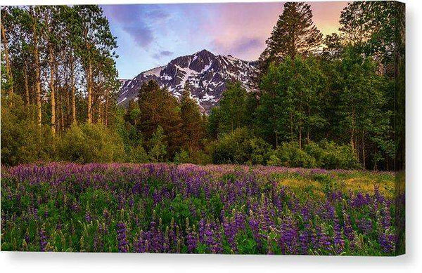 "Lupine Spring By Mike Breshears - Canvas Print-12.000"" x 6.625""-Lake Tahoe Prints"