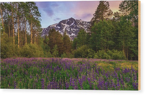 Lupine Spring By Mike Breshears - Wood Print