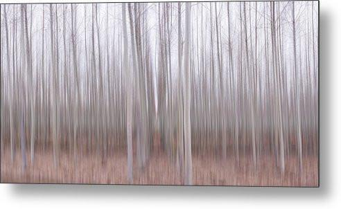 Pastel Grove - Metal Print-Lake Tahoe Prints