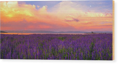 Tahoe City Lupine Sunset By Brad Scott - Wood Print