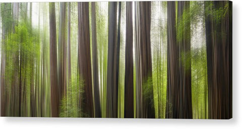 Take Me To The Forest by Brad Scott - Acrylic Print