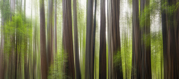 Take Me To The Forest by Brad Scott - Art Print