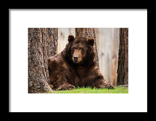 The King Of Tahoe By Brad Scott - Framed Print-Lake Tahoe Prints