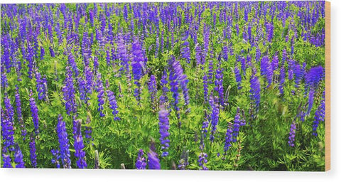 Windy Lupines By Brad Scott - Wood Print