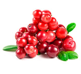 Lingonberry Plants Imported from USA-(Regal and Red Pearl variety) 6-9 months Old.